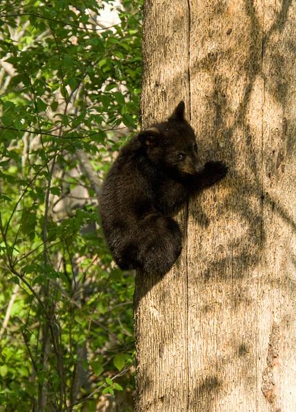 Bear Cubs-16.jpg