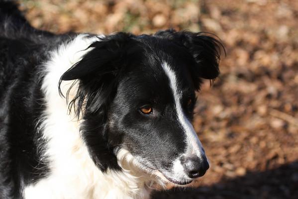 2007 10.12 Dog Candids by Ian