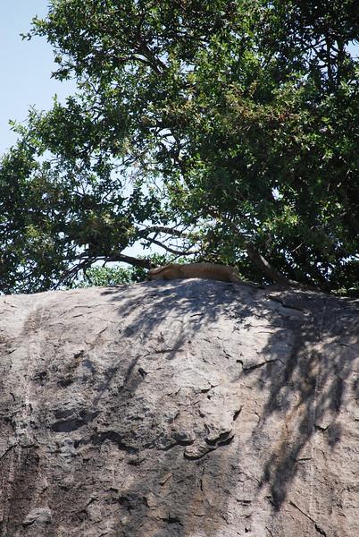 Serengeti (168).JPG