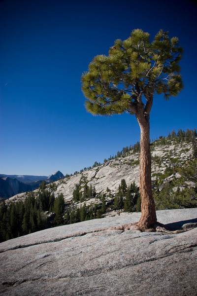 Olmsted Point,