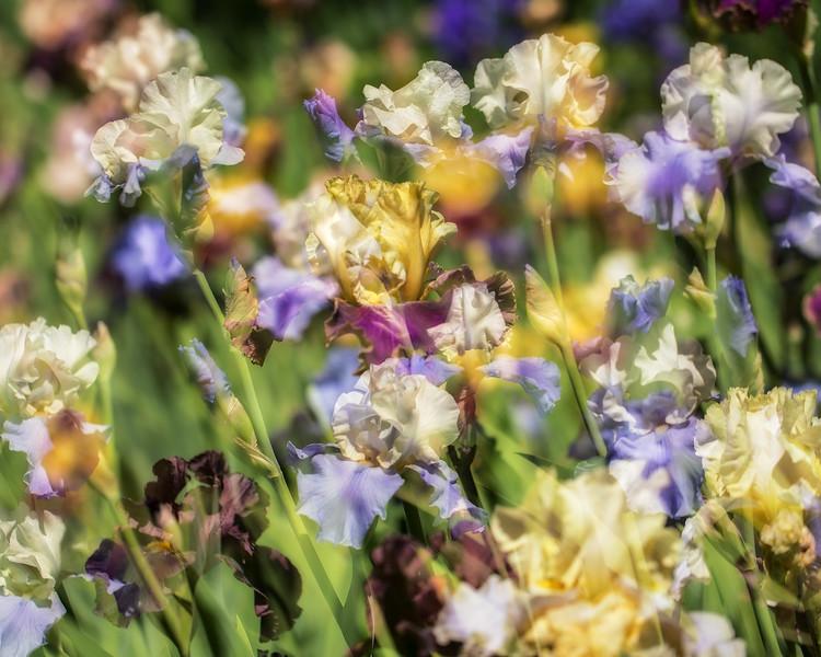 Iris double exposure