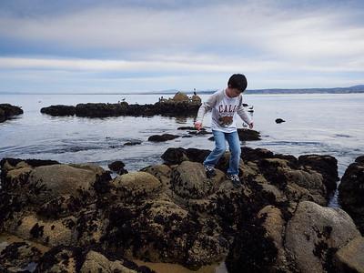 Monterey 2014