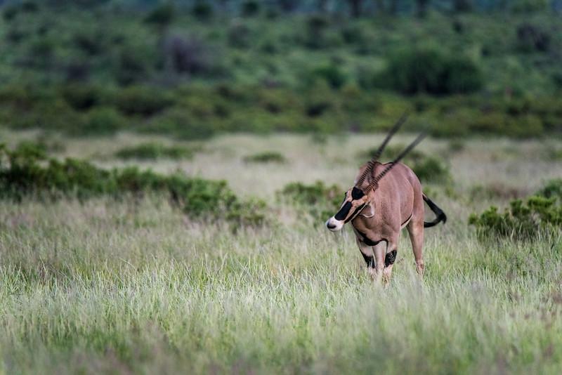 Samburu (27 of 70).jpg