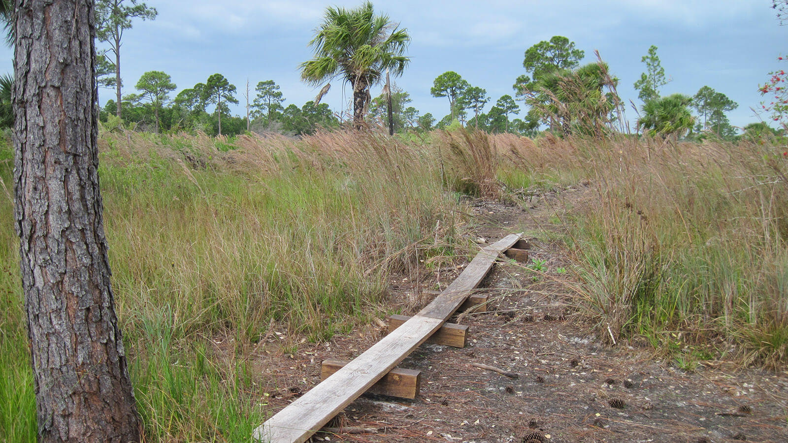 Bog bridge over dry streambed