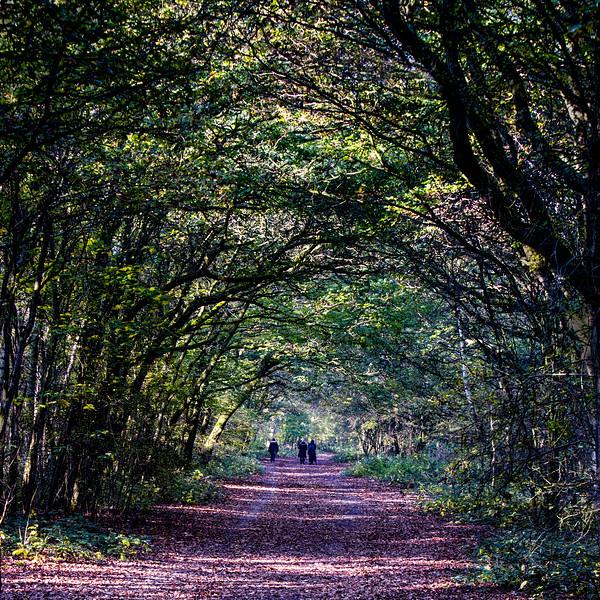 Hainault Forest.jpg