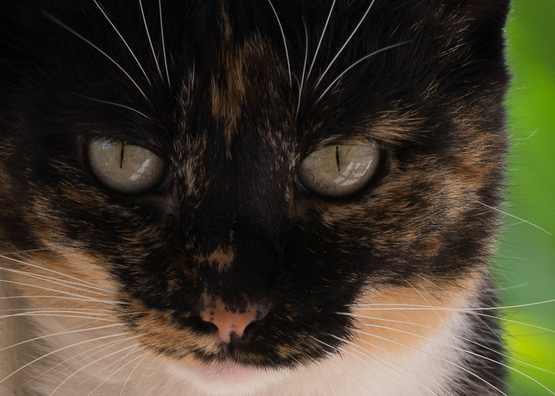 Kitty-3.jpg