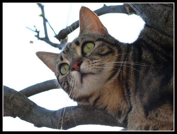 Spiga and the tree