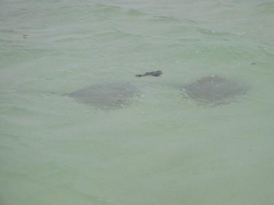 Heron Island Snorkel