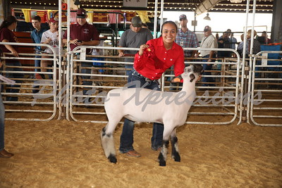 Lamb Show Sunday Sept 23