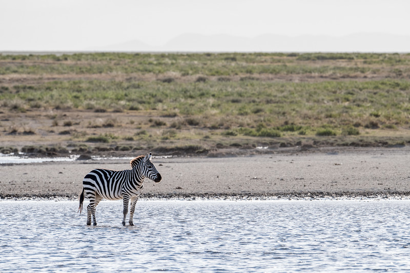 Tanzania_Feb_2018-333.jpg