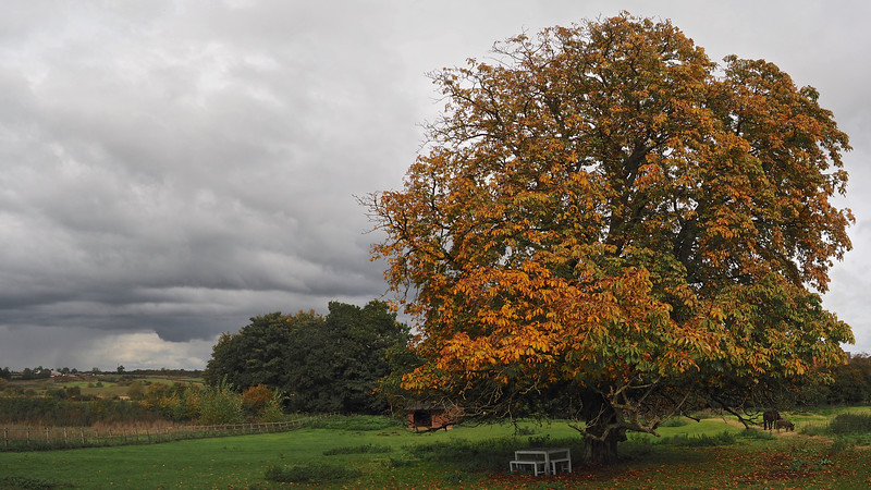 Autumn Conker Tree
