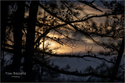 Pinebush January and February 2021
