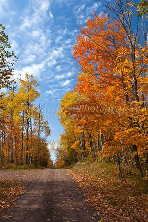 Minnesota Fall Foliage Color