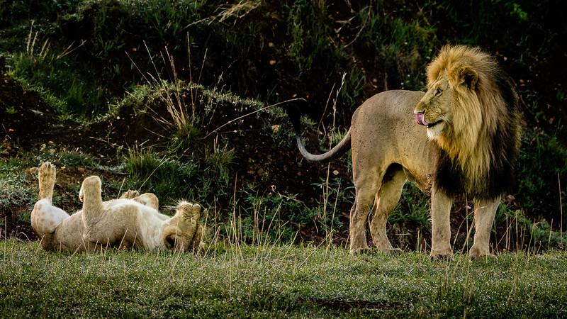 Lions-0132.jpg