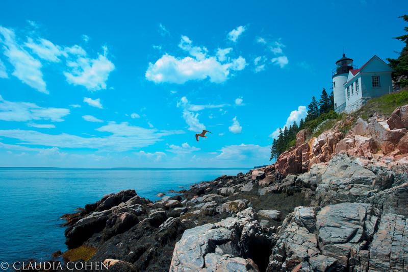 lighthousebird.jpg