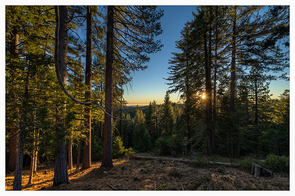 Yosemite Forest Sunset