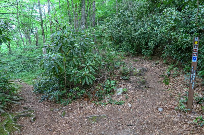 Bridges Camp Gap Trail -- 4,180'