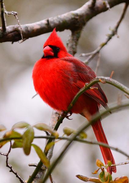 Jan 2014 Cardinal