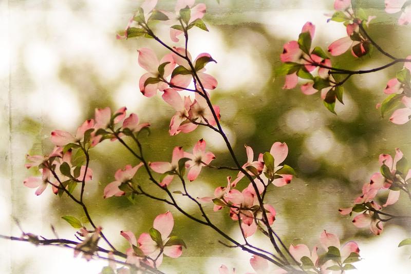 LTD_2011-03-29_0273_2