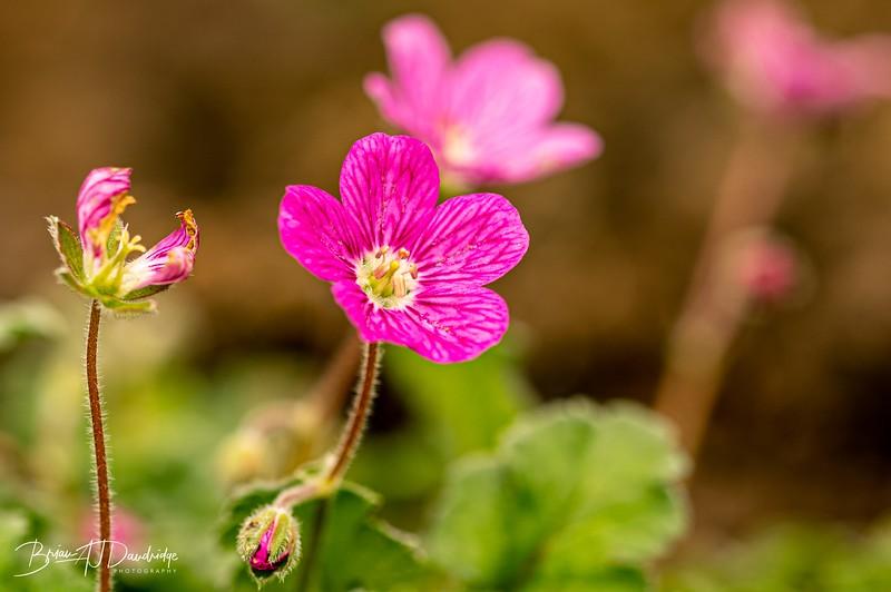 Garden colour-3335.jpg