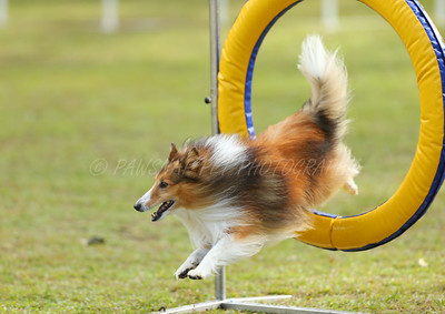State Agility Trial