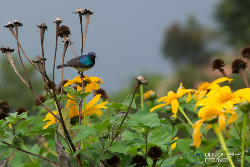 Bird and Flowers - Lake Burera, Rwanda