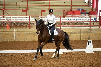 Horse 192