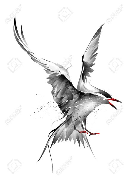 painted bird Arctic Tern in flight on a white background