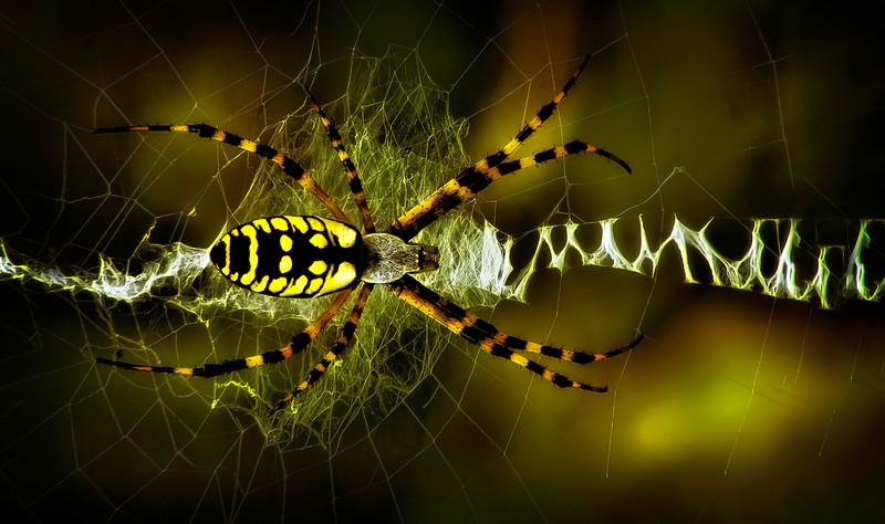 Spiders-Arachnids-005.jpg