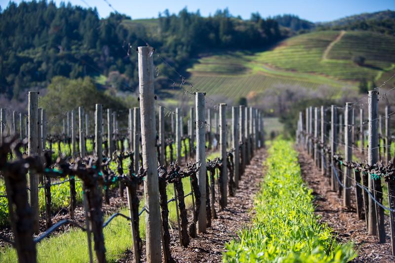 Cast winery
