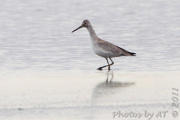 2011-09-17 Riverlands Migratory Bird Sanctuary