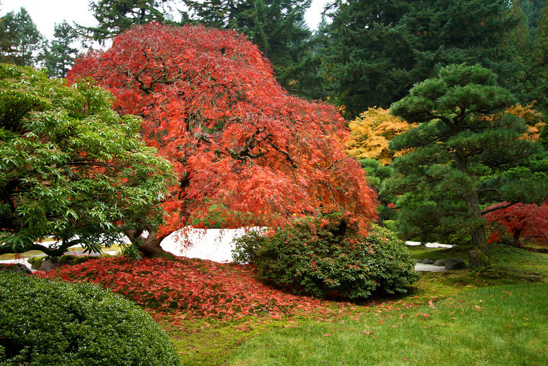 Portland Japanese Garden  11-11-11  3549.jpg
