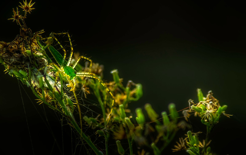 Spiders-Arachnids-058.jpg