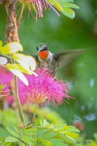 New Year 2021 Hummingbird