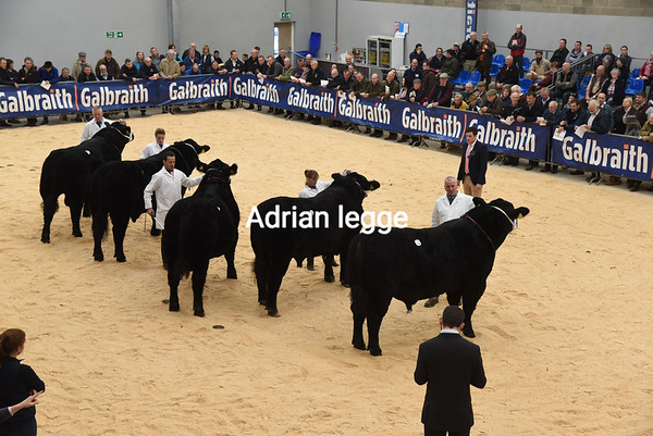 Stirling Bull Sales October 2018