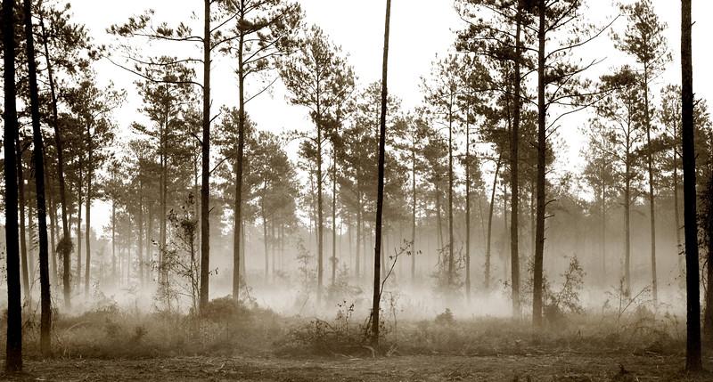 2006-1 Fog in Pine Trees Black and White for glossy.jpg
