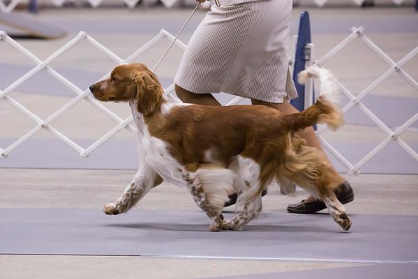 Roanoke Kennel Club, Aug 2014
