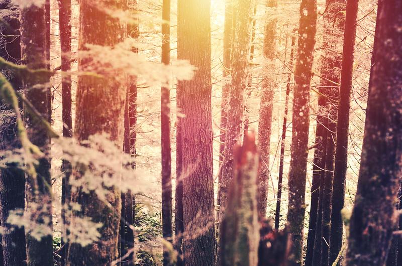 fallwoods.jpg