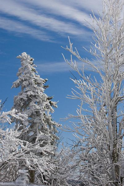 Newfound Gap Jan 2009