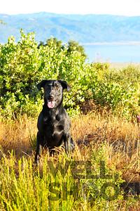 Raney dogs - portraits