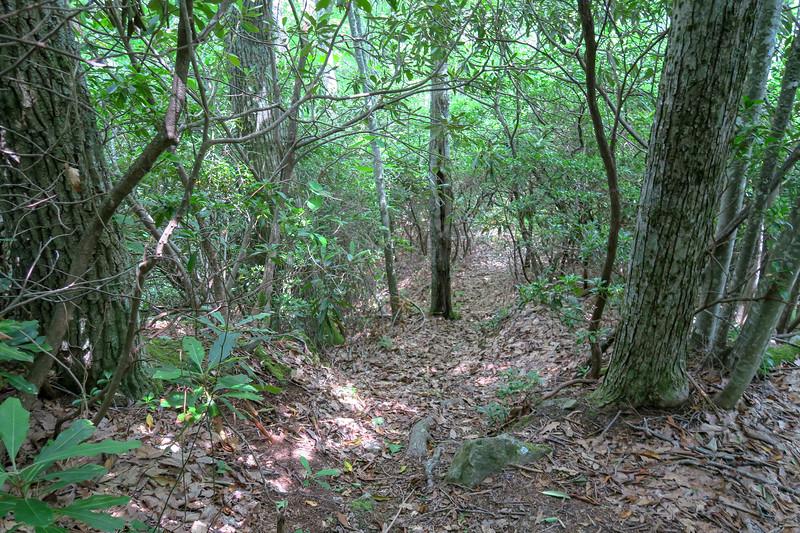 Green Mountain Trail -- 4,180'