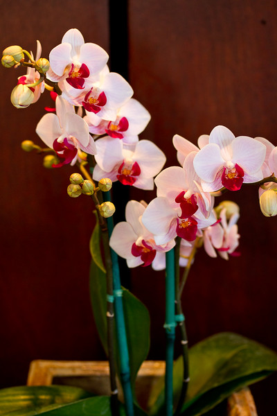 SF_Orchid_Show-31.jpg