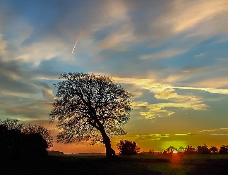 Ian Peters_Lone Tree at Dawn (2).jpg