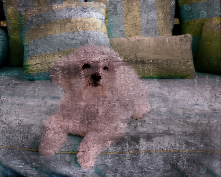 bill's dog-32 copy.jpg