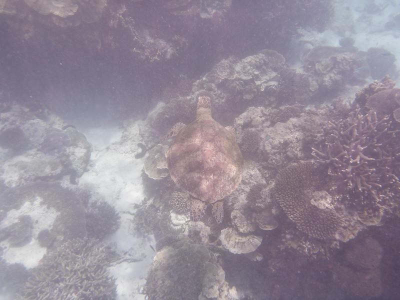 09. Lady Elliott Island-0095.jpg