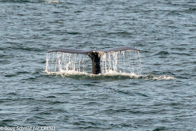 2019-08-09-Montauk-Whale Watch