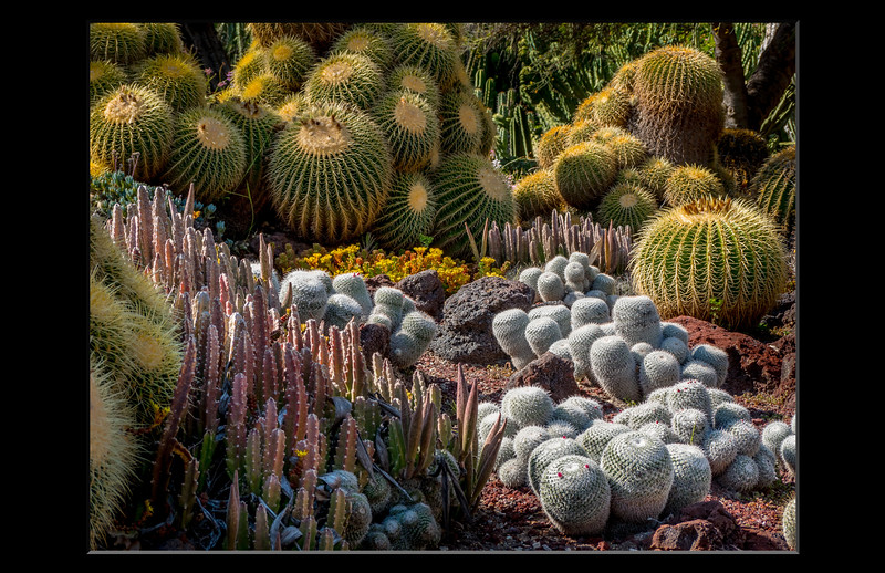 09-Cacti.jpg