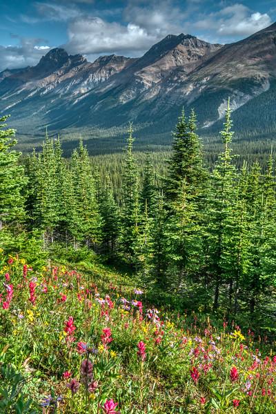 Banff NP 2019-23.jpg