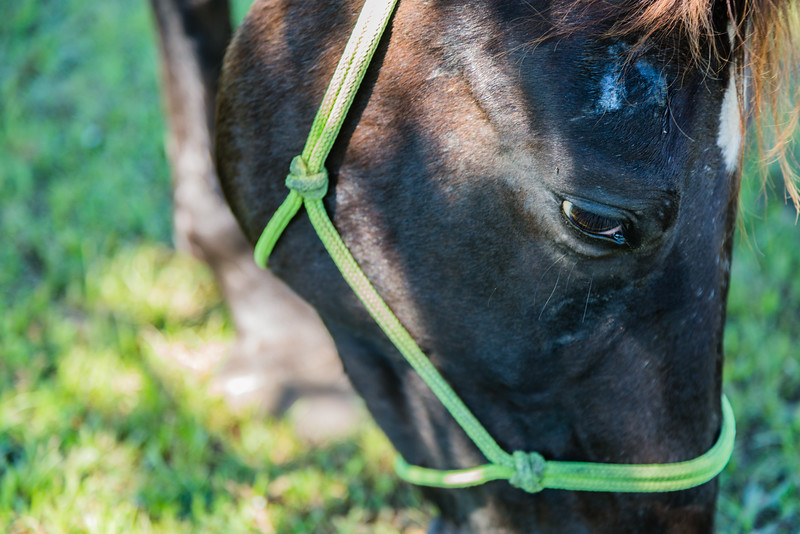 Phoenix the Appaloosa/Pasofino and some other images from around the Country Fair event at the Equine Rescue and Adoption Foundation (ERAF) in Martin County on Sunday, October 23, 2016. (Joseph Forzano / Deep Creek Films & Photography)