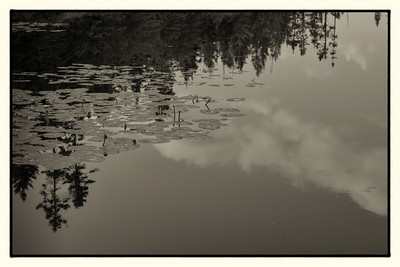 Perfect Stillness